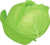 圆白菜例证传染媒介 库存图片
