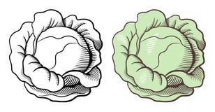 圆白菜例证 库存图片