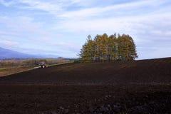 圆白菜农场在晚秋天 免版税库存图片