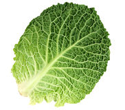圆白菜叶子成熟开胃菜 库存图片