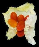 圆白菜叶子用成熟蕃茄 库存照片