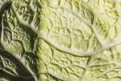 圆白菜叶子的肋骨 库存图片