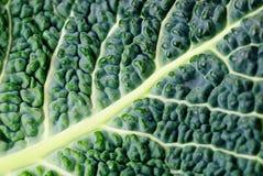 圆白菜叶子纹理 库存照片
