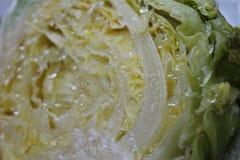 圆白菜和冰 库存照片