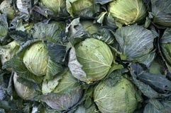 圆白菜在Lach市场,槟知省,越南上 库存图片