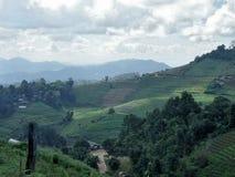 圆白菜大阳台谷在安静的小山的 库存照片