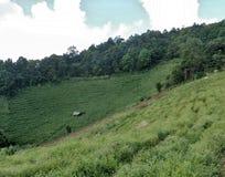 圆白菜大阳台谷在安静的小山的 免版税图库摄影