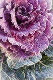 圆白菜报道了装饰树冰红色 免版税库存照片