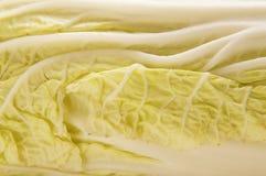 圆白菜接近的新绿色图象 图库摄影