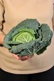 圆白菜新鲜的健康有机开胃菜 库存图片