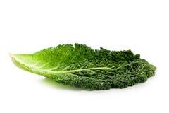 圆白菜新鲜的叶子开胃菜 免版税图库摄影