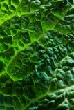 圆白菜新鲜的叶子开胃菜 库存照片