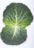 圆白菜新鲜的叶子开胃菜 图库摄影