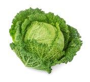 圆白菜新鲜的开胃菜 免版税库存照片