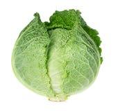 圆白菜查出的开胃菜白色 免版税库存照片