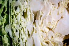 圆白菜的骨肉 库存照片