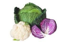 圆白菜种类 图库摄影