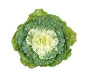 圆白菜装饰白色 免版税库存照片