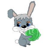 圆白菜野兔 库存图片
