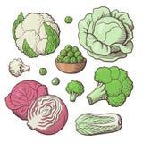 圆白菜集合颜色 免版税图库摄影