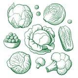 圆白菜集合 免版税库存图片