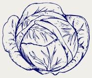 圆白菜 乱画样式 库存图片