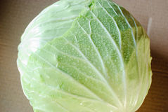 圆白菜绿色叶子 免版税库存图片