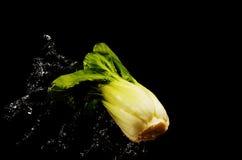 圆白菜头飞溅了入水 免版税库存照片