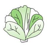 圆白菜 图库摄影