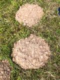 圆的土制痣洞穴 安置痣以绿草为背景 抽象背景异教徒青绿 免版税库存照片