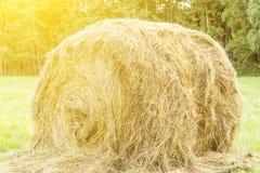 圆的大包在热的太阳下的干草在领域,家畜饲料,农业,农场,美好的自然本底 免版税库存图片