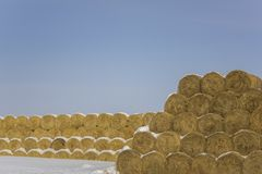 圆的大包在行的干燥黄色干草谎言在反对一干净的天空蔚蓝的雪下 库存照片