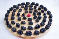 圆的套许多黑莓和莓在木盘子 库存照片