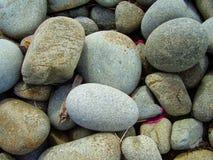 圆的小卵石一个石海滩  免版税库存图片