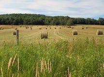 圆的干草捆收获了在夏天期间在纽约州 这些主要为牛使用输入牛奶产业 免版税图库摄影