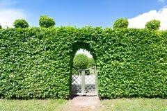 圆的形状的修剪的花园绿色树在装饰庭院里修筑树篱 图库摄影