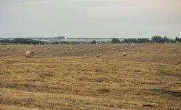 圆的捆秸杆 收获在麦田的秋天 免版税图库摄影