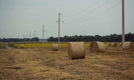 圆的捆秸杆 收获在麦田的秋天 库存照片