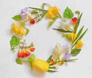 圆的春天花框架 库存图片