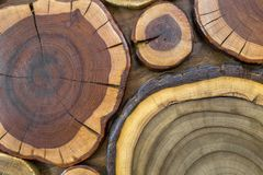圆的木没有漆的固体自然生态软的色的褐色和黄色有裂痕的树桩背景,树削减了部分与 免版税图库摄影
