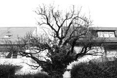 圆的树黑色白色房子树反射在水中 免版税库存照片