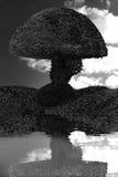 圆的树黑色白色房子树反射在水中 库存图片