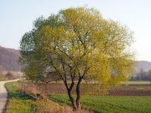 圆的树 免版税库存图片