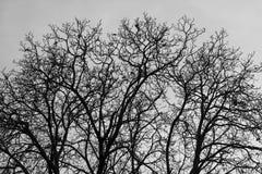圆的树 免版税图库摄影
