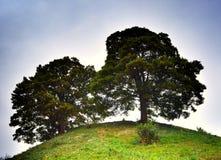 圆的树 库存照片