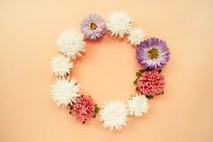 圆的框架由白色,桃红色和淡紫色翠菊制成开花与文本的空间在苍白桃子柔和的淡色彩背景 库存图片