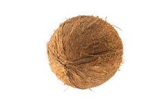 圆的椰子果子 库存图片