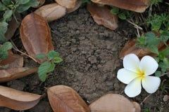 圆的花和植物 免版税库存照片