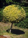 圆的装饰树 免版税库存照片