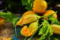 圆的黄色夏南瓜和夏南瓜花,新鲜在庭院里, 库存照片